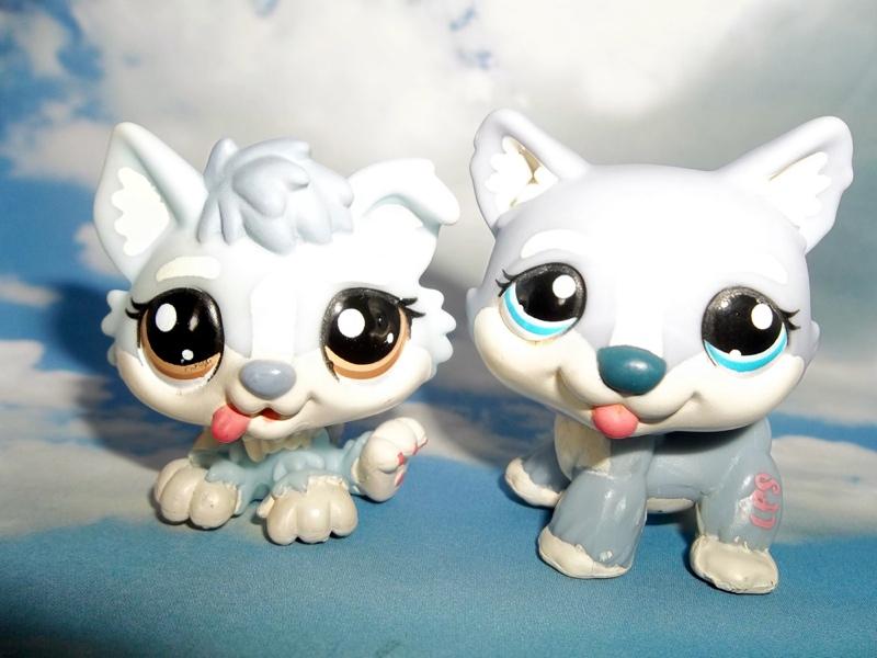 littlest pet shop husky - photo #33